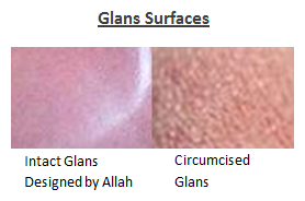 Glans surfaces